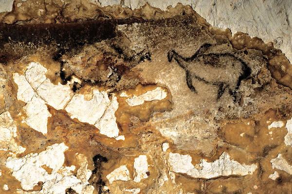 Lukisan burung auk di Gua Cosquer, Prancis