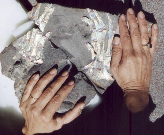 Fosil tulang tangan Jaime Gutierrez, Kolombia