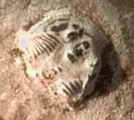 Jejak sepatu dengan trilobite, Utah