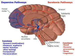Dopamin vs Serotonin