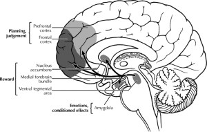 Sistem Ganjaran Dopamin