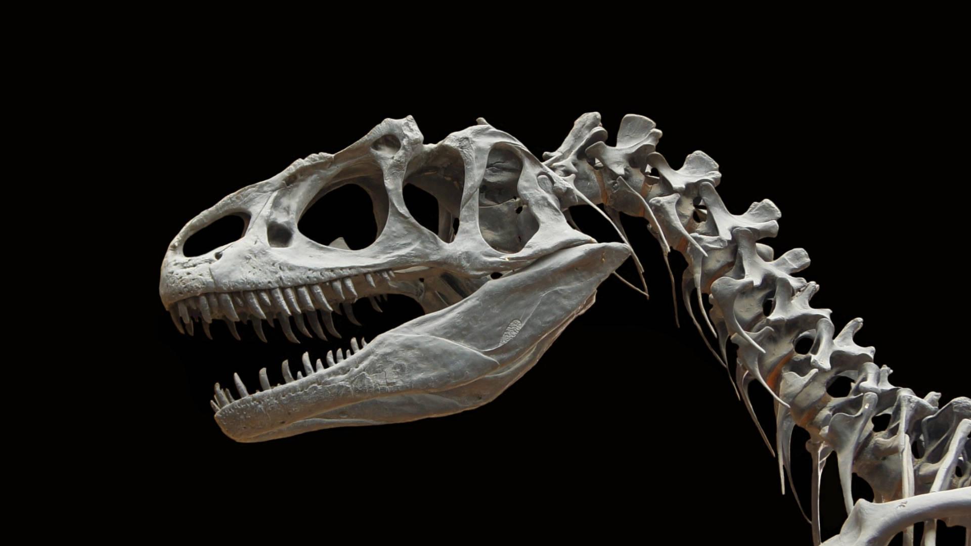 Dinosaur Skeleton Bone — WikiImages
