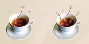 Saat secangkir kopi panas bersetimbang dengan udara sekitar, partikel kopi (putih) dan partikel udara (cokelat) berinteraksi dan menjadi cempuran status cokelat dan putih yang terjerat. Setelah beberapa waktu, mayoritas partikel pada kopi berkorelasi dengan partikel udara; kopi telah menggapai kesetimbangan termal. (Lidia del Rio)